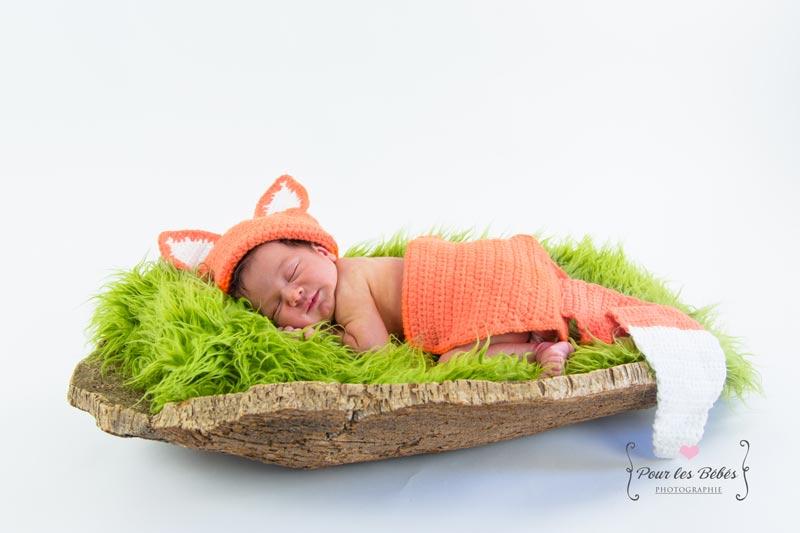 photographe-naissance-renard